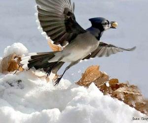 bird, québec, and animal image