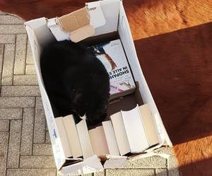 books, cat, and box image
