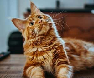 Amber Kipp @sadmax - unsplash / Grand Rapids, MI, USA One of my cats, Vladimir. He is from Russia!