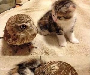 Owl snuggle you...