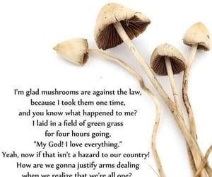 mushrooms are illegal, same for lsd, and psychedelicized image