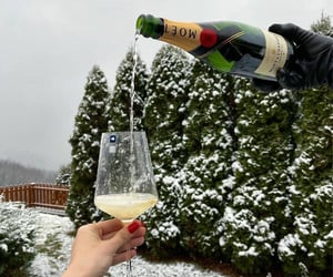 champagne, christmas, and fashion image