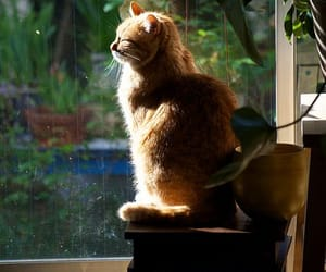 cat and sun image