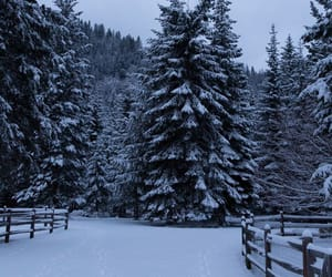 fence, winter, and spruce image