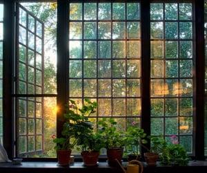 plants, window, and aesthetic image