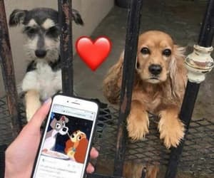 couple, disney, and dogs image