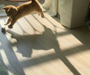 and, shadow, and sunshine image
