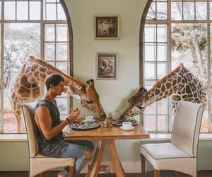 adventure, giraffe, and nature image