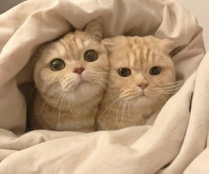 couple, cuties, and like image