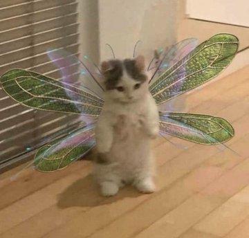 cat, fairy, and kitten image