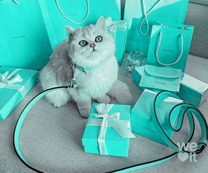 tiffany & co, animal, and cat image