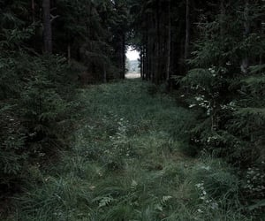 creepy, forest, and nature image