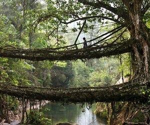 tree, bridge, and india image