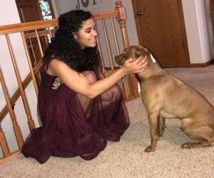 animal, dog, and dress image