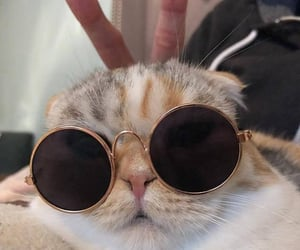 cat, simply things, and sunglasses image