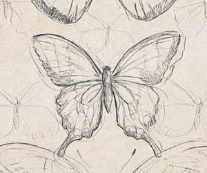 aesthetic, archive, and butterflies image