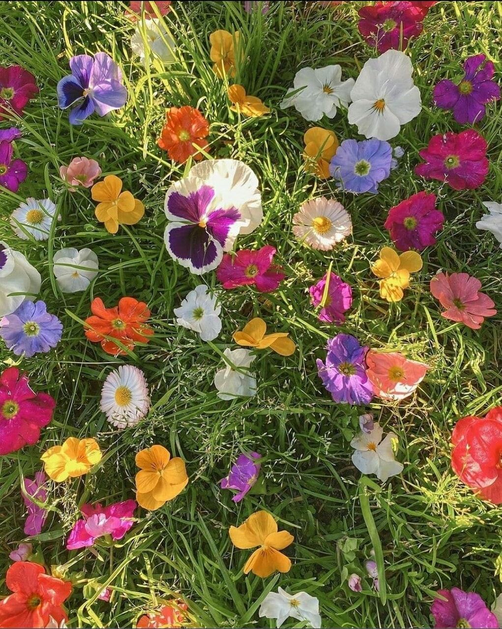 flowers, flores, and fleurs image