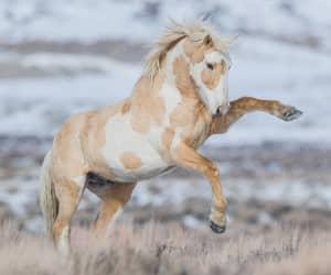 Mustang, Sand Wash Basin, Colorado  Photo by Scott Wilson / Quelle: facebook.com