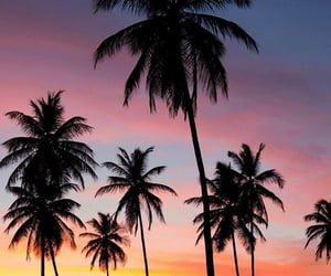 palm trees and tropical image
