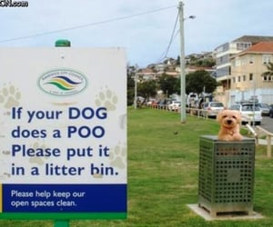 litter, bin, and dog image