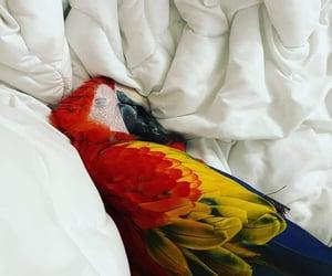 bird, macaw, and nap image