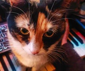 usamix_1974 朝ごはんください、の時間。#hug_cat