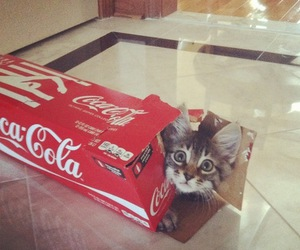 cat, coca cola, and coca-cola image