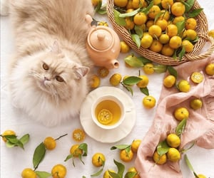 cat, cup of tea, and tangerines image