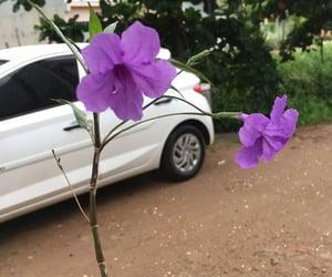 flowers, nature, and florish image