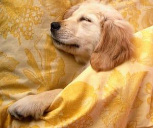 animals, cute dog, and sheets image