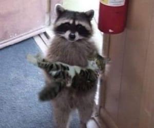 cat, animal, and raccoon image