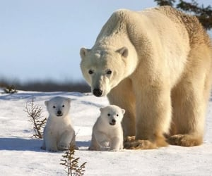 cubs, animals, and momma image