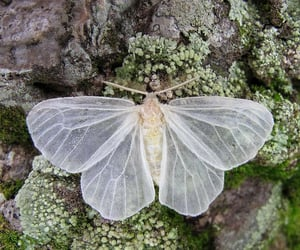 butterfly, nature, and moth image