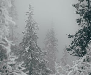 forest, gray, and grey image
