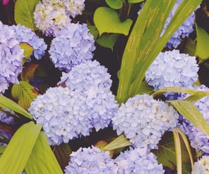 blue, flowers, and leave image