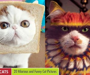 funny, funny pictures, and funny cats image