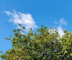 blue, sky, and bluesky  image