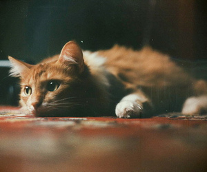cat, old, and red image
