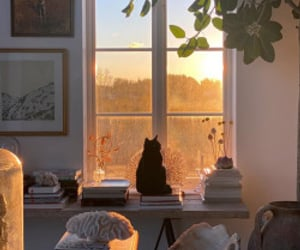 cat, home, and cozy image
