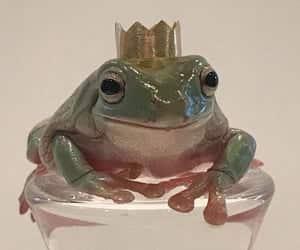 frog and cottagecore image