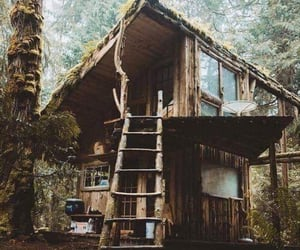 adventure, cabin, and rainforest image