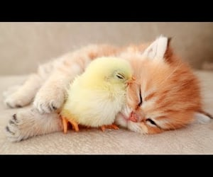 adorable, animals, and aww image