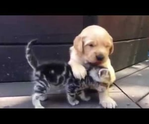 adorable, animals, and cutest image