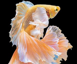 Gold fish by Natsaran Sirikit