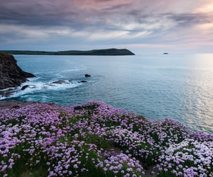 ocean, beautiful, and flowers image