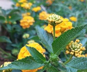 flor, natureza, and gren image