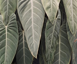 leaves, green, and nature image