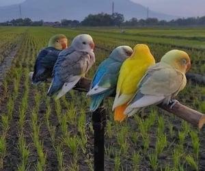 bird, green, and nature image