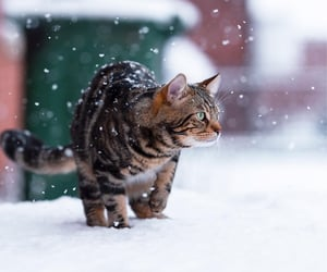 Snow cat by Ionut Donici