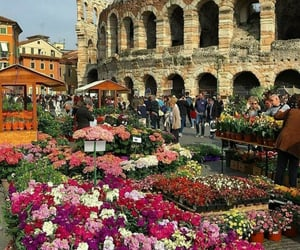 flowers, aesthetic, and italy image